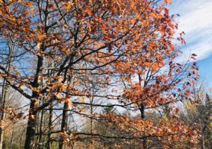 L'automne à la Clinique dans les arbres